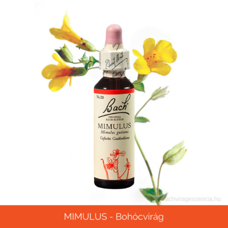 MIMULUS - Bohócvirág eredeti Bach-virágeszencia