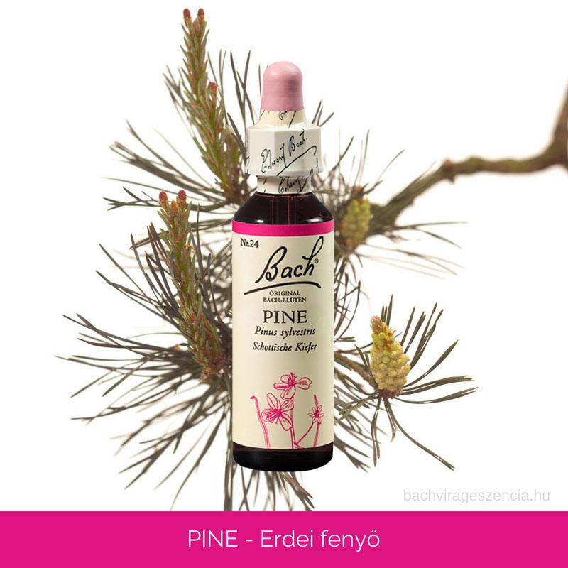 Pine - Erdei fenyő eredeti Bach-virágeszencia