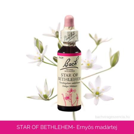 Star of Bethlehlem - Ernyős madártej eredeti Bach-virágeszencia