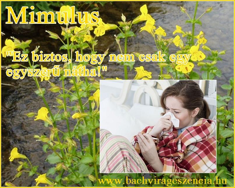 Az influenza esetén a Bach-virágok használata támogatja a gyógyulást.