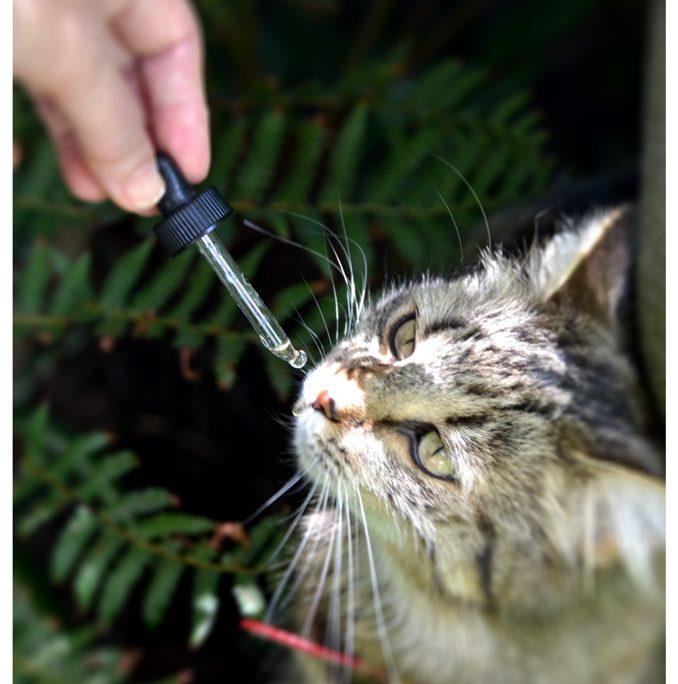 Bach-virágterápia állatoknak-macska