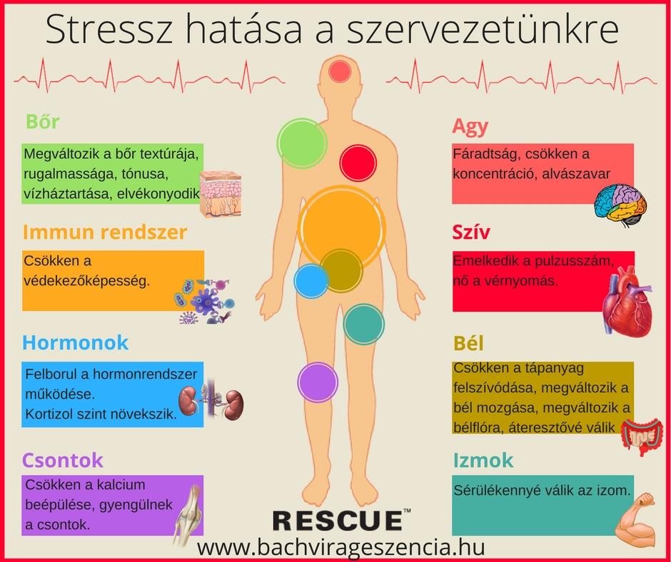 Stresszes életünk így hat a testünkre.