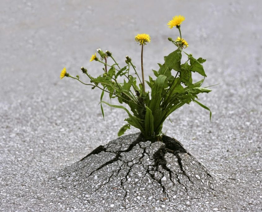 Rugalmasság kell a változáshoz.