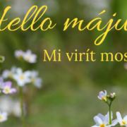 majus-Bach-virágai