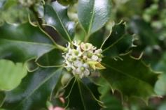 Holly - Magyal