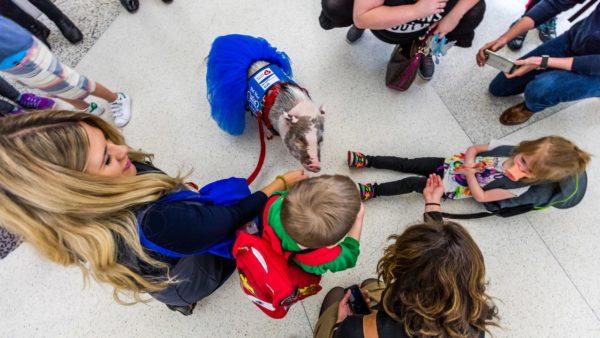 Lilou a terápiás malacot imádják a gyerekek.