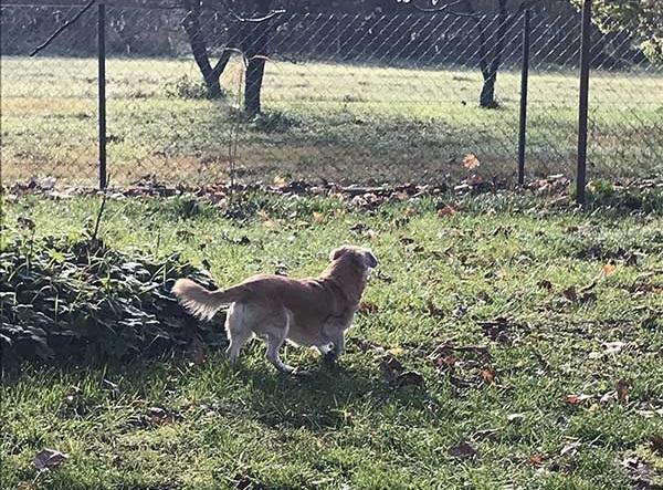 Utazás kutyával. Benji a kertben