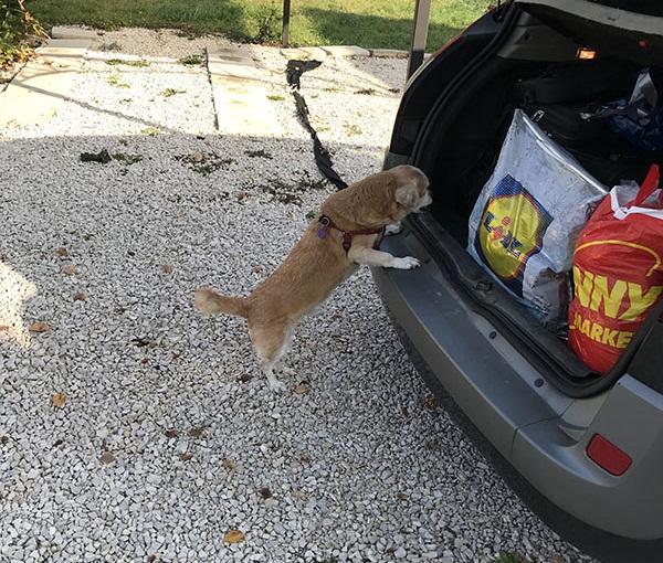 Utazás kutyával, már sima ügy.